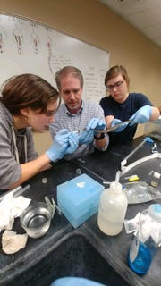 Researchers flush the lungs of a rattle snake.