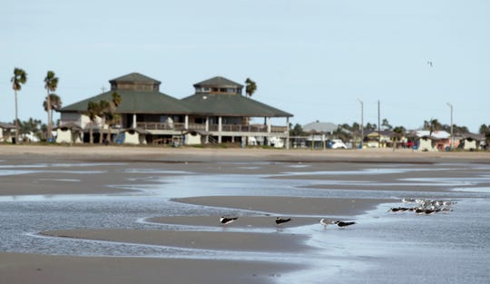 Black skimmers, seagulls and other birds make use of the beach Thursday, Jan. 12, 2012 at the Rockport Beach Park.
