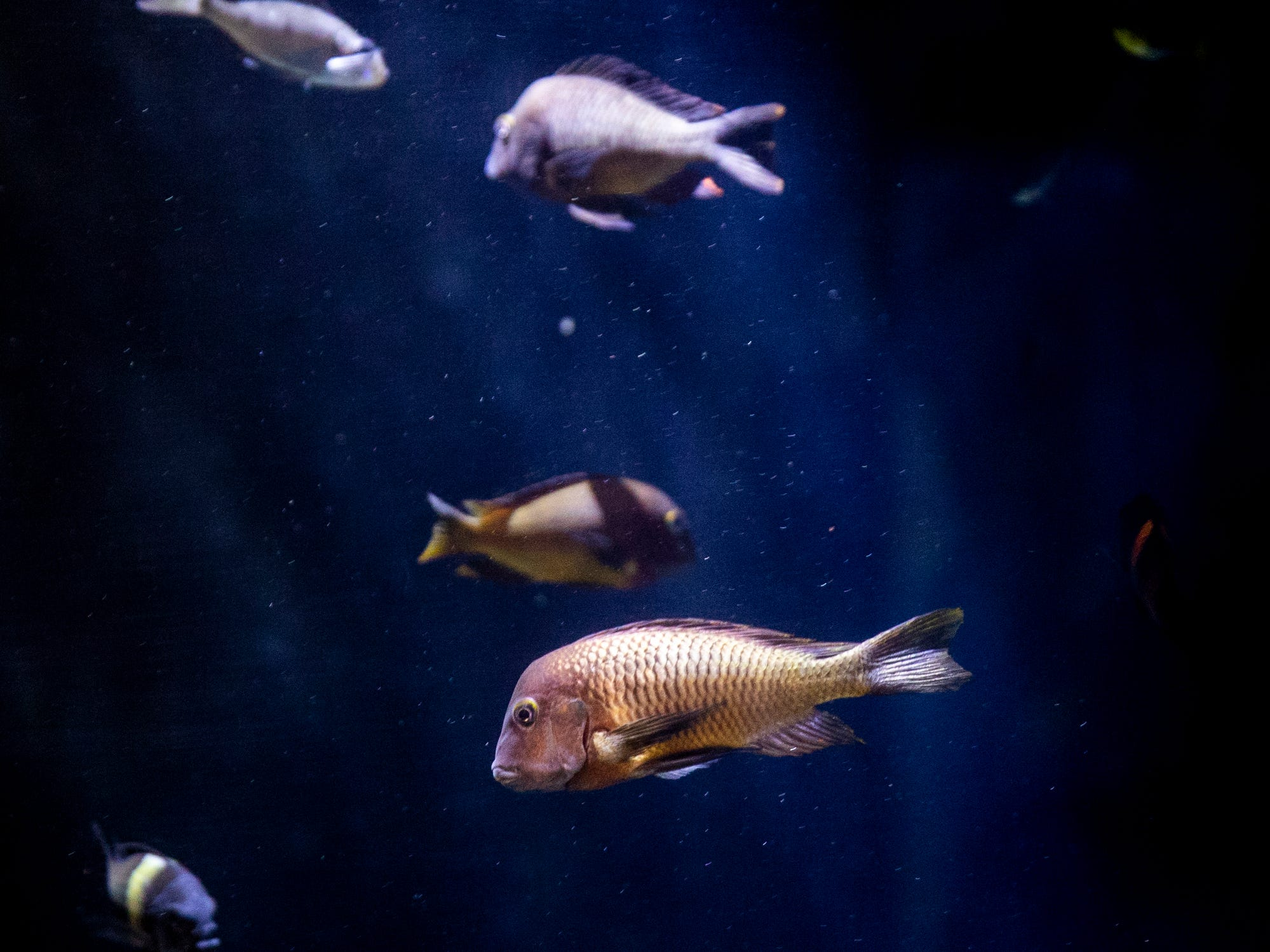 Dozens of species of plants and animals live among 13 tanks at the new Freshwater Falls exhibit at Newport Aquarium Thursday, April 11, 2019 in Newport, Ky.