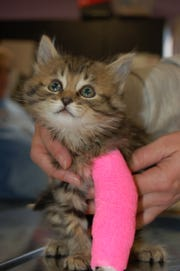 Boone County Animal Shelter will be able to perform more life-changing operations on kittens too with the $35,000 grant given April 4 by Petco Foundation.