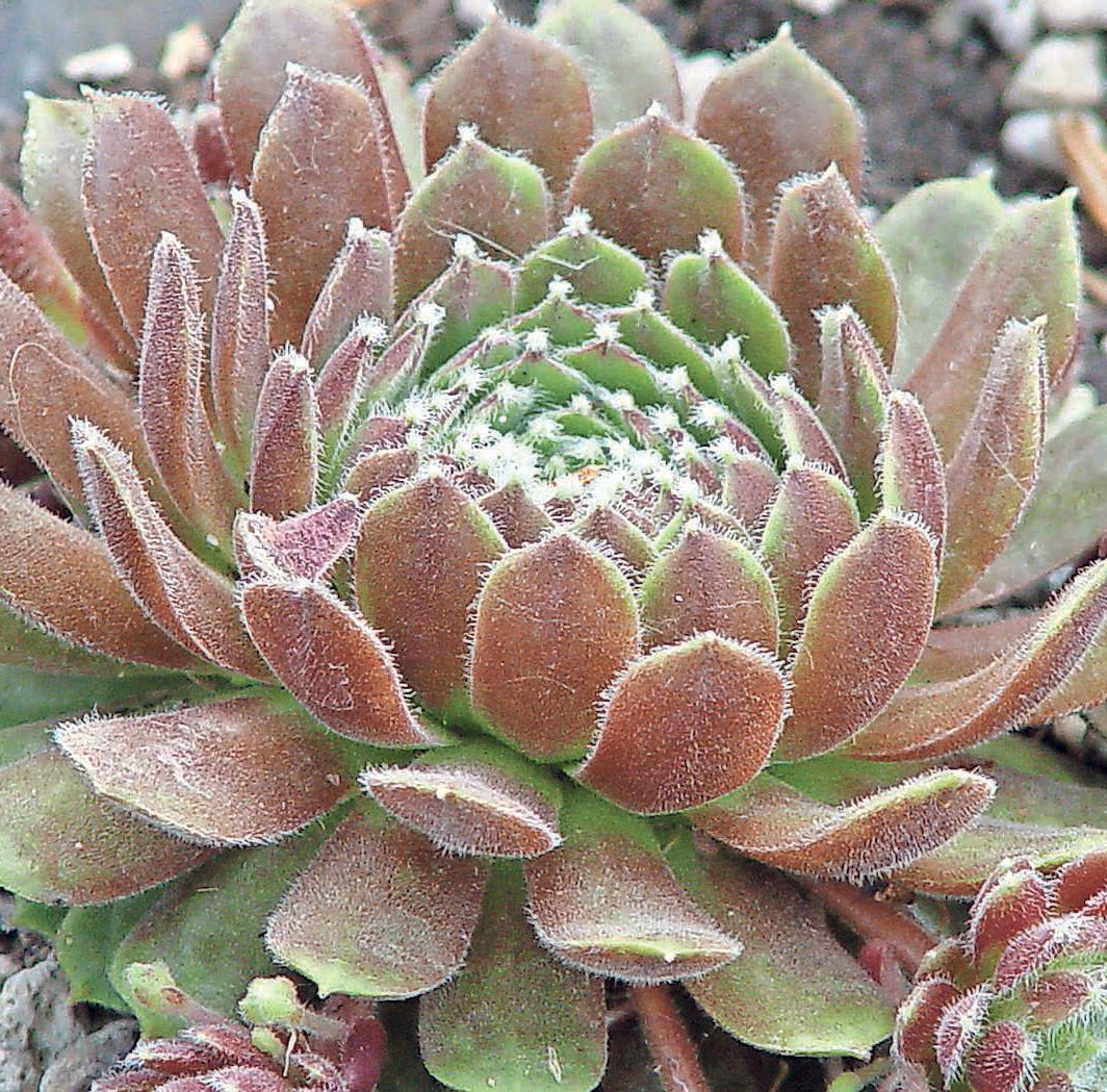 Gardening: Working on the plantings, carefully