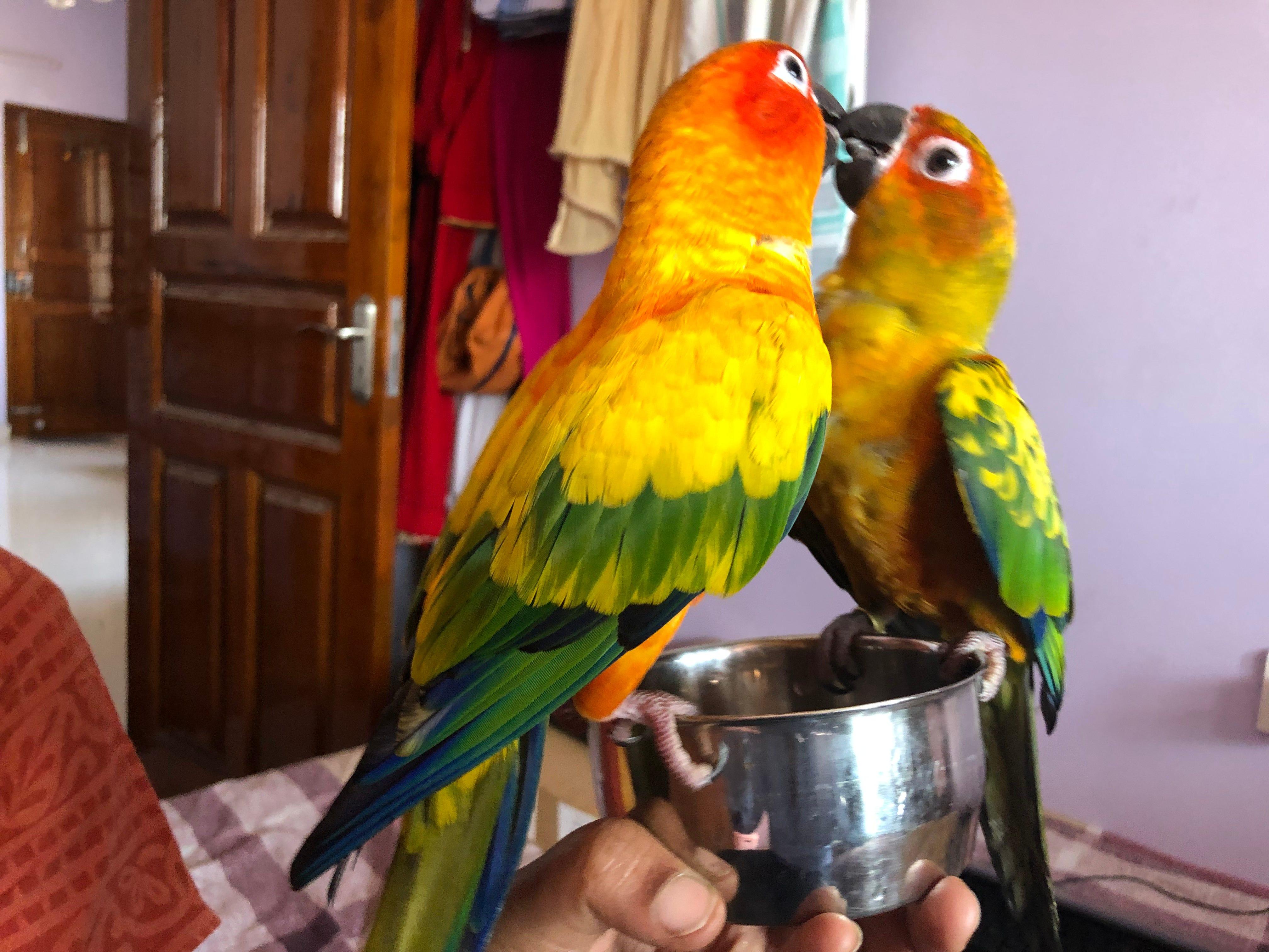 Ashok G. shared photos of Meenu and Chammu.