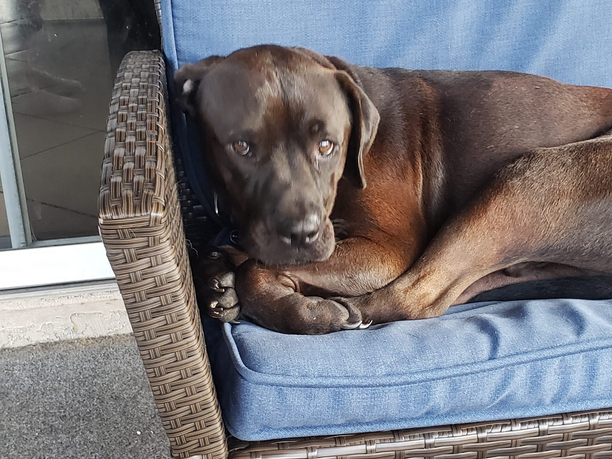 """Dawn Fitzsimmons shared this photo taken a few weeks ago of 3-year-old Max from Cape Coral. """"Max is the sweetest boy in the world!"""" Fitzsimmons wrote."""