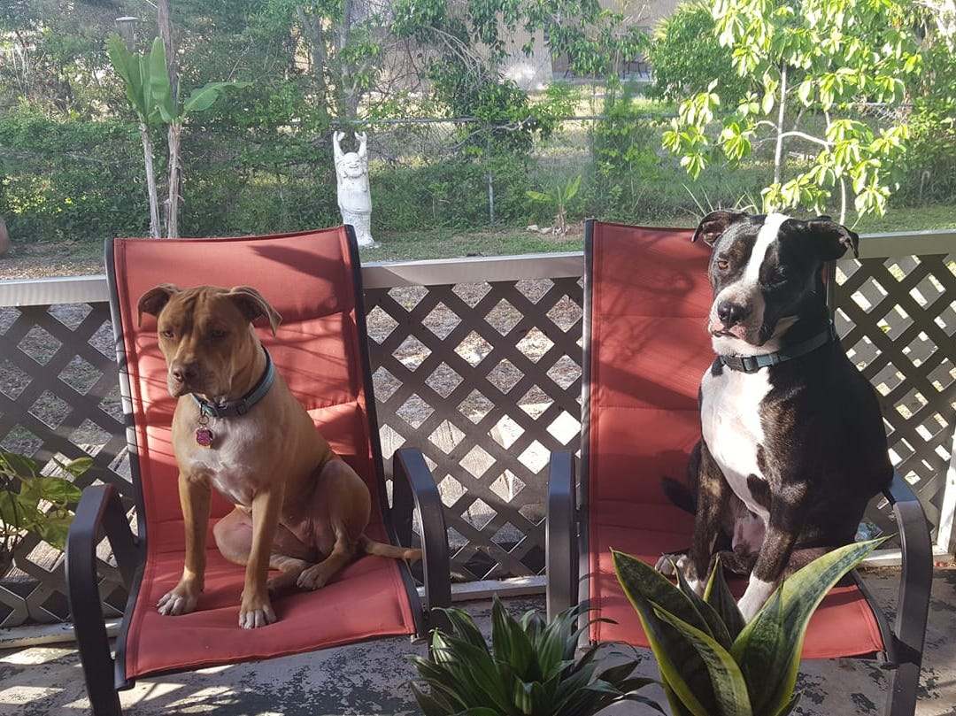 Jennifer Bossi shared a photo taken two weeks ago in Fort Myers, Fla of Bozley, right, and Ginger.