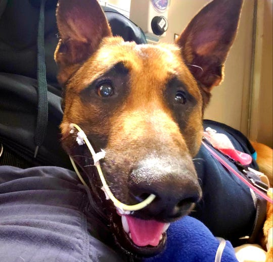 Pyro, a Green Bay police dog, is recovering from being stabbed during an incident April 7 on Green Bay's west side.