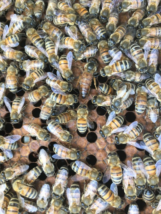 Jerry Gibbs raises bees near his home in Fishers