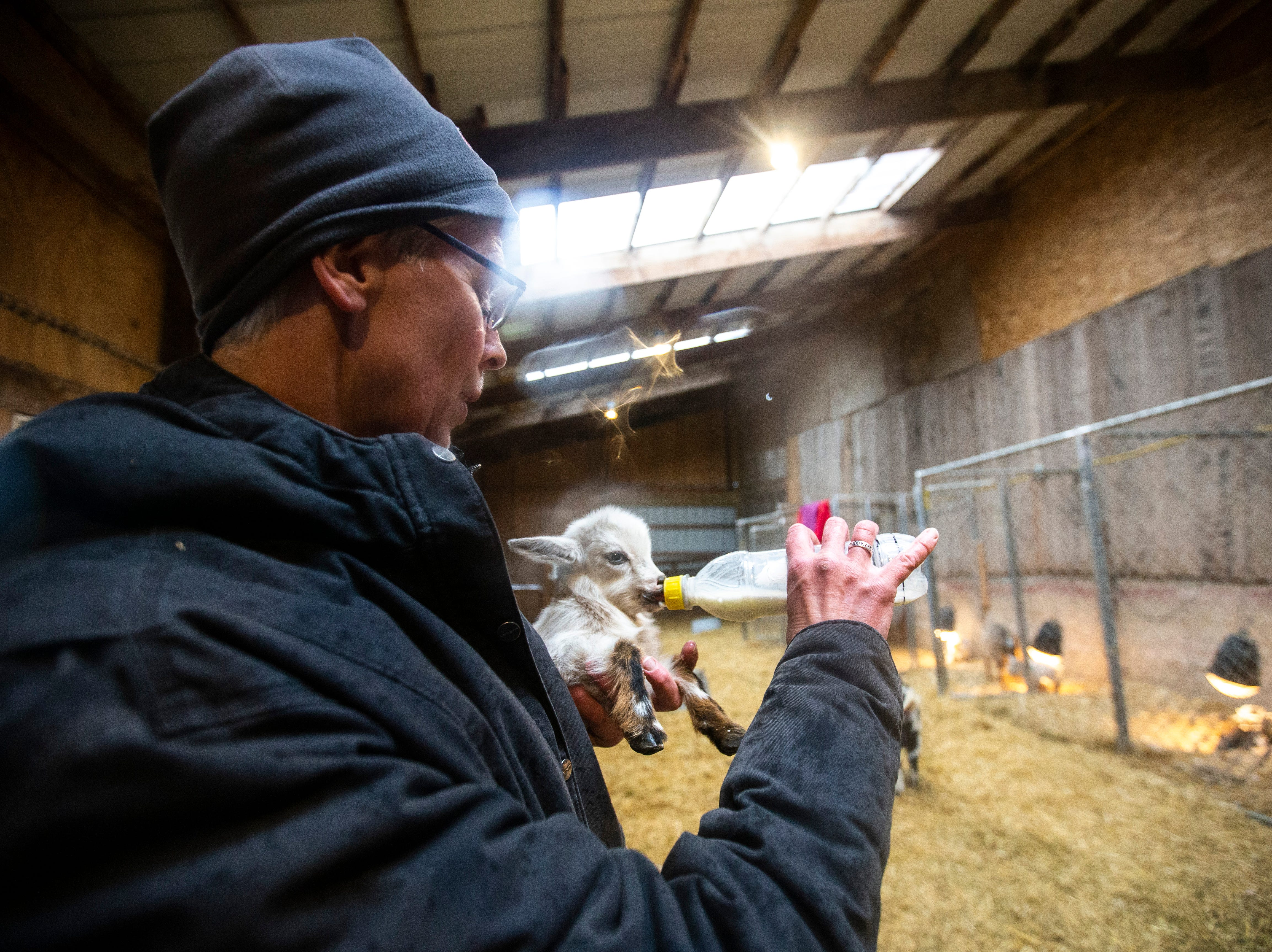 Susan Young feeds Tina, a young dairy goat, on Thursday, April 11, 2019, at Lucky Star Farm in Iowa City, Iowa.