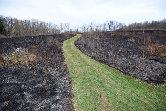 April 11, 2019Despite Wednesday's controlled prairie burn, and another controlled burn in March, there is still plenty of scenic landscapes, wildlife and signs of spring at Gorman Nature Center.
