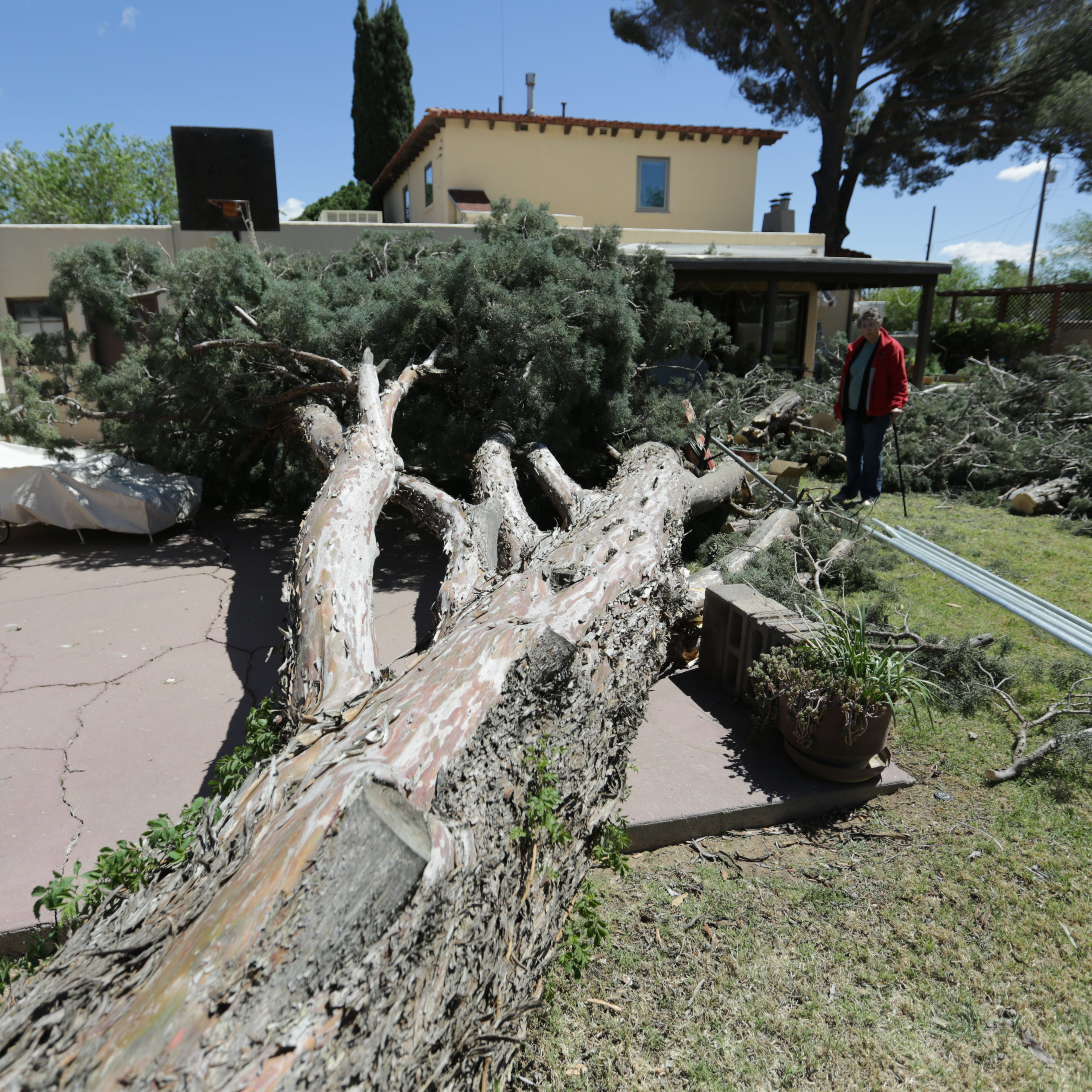 Extreme wind topples 80-year-old tree, breaks DASO windows, knocks over WSMR missiles