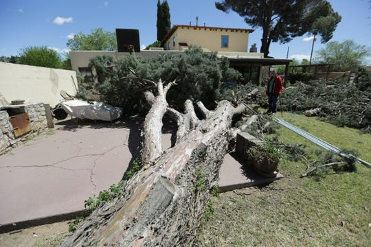 An 80-year-old cypress tree was knocked over in a major windstorm on Wednesday, April 10, 2019. Homeowner Kathryn Holmes, a retired teacher, is pictured with the tree on Thursday, April 11, 2019.