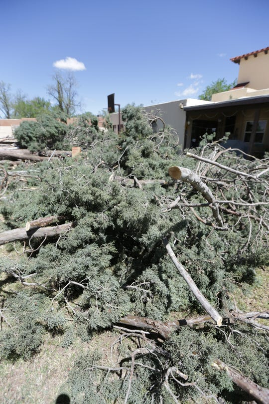 Mounds of tree branches remain Thursday, April 11, 2019, after a windstorm toppled an 80-year-old cypress tree in the backyard of Kathryn and Joseph Holmes of Las Cruces.