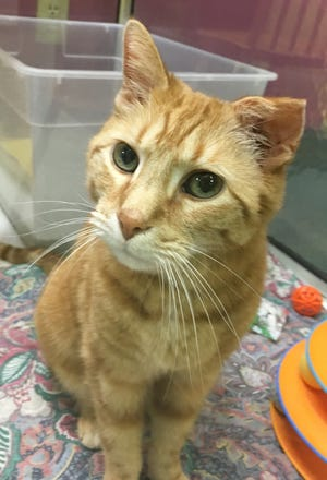 Oscar is older than most cats at the humane society but is looking for a perfect companion for the rest of his life.