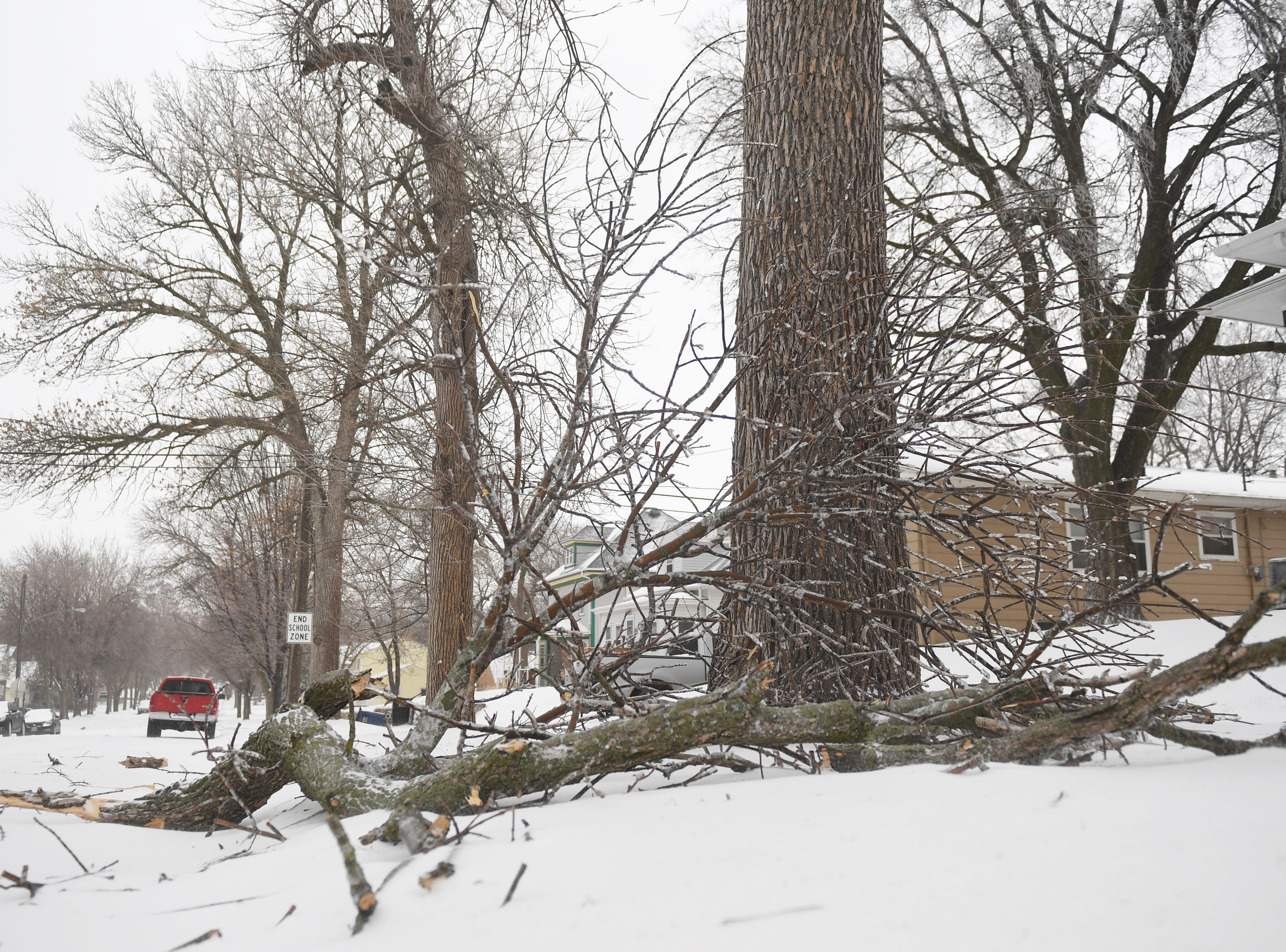 Tree branches fall from trees after icy rain and snow Thursday, April 11, in Sioux Falls.