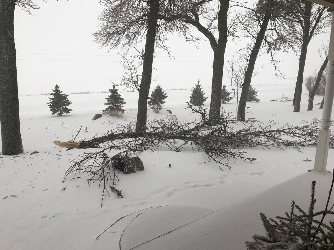 Fallen tree branches north of Madison, South Dakota during a blizzard on Thursday, April 11, 2019.