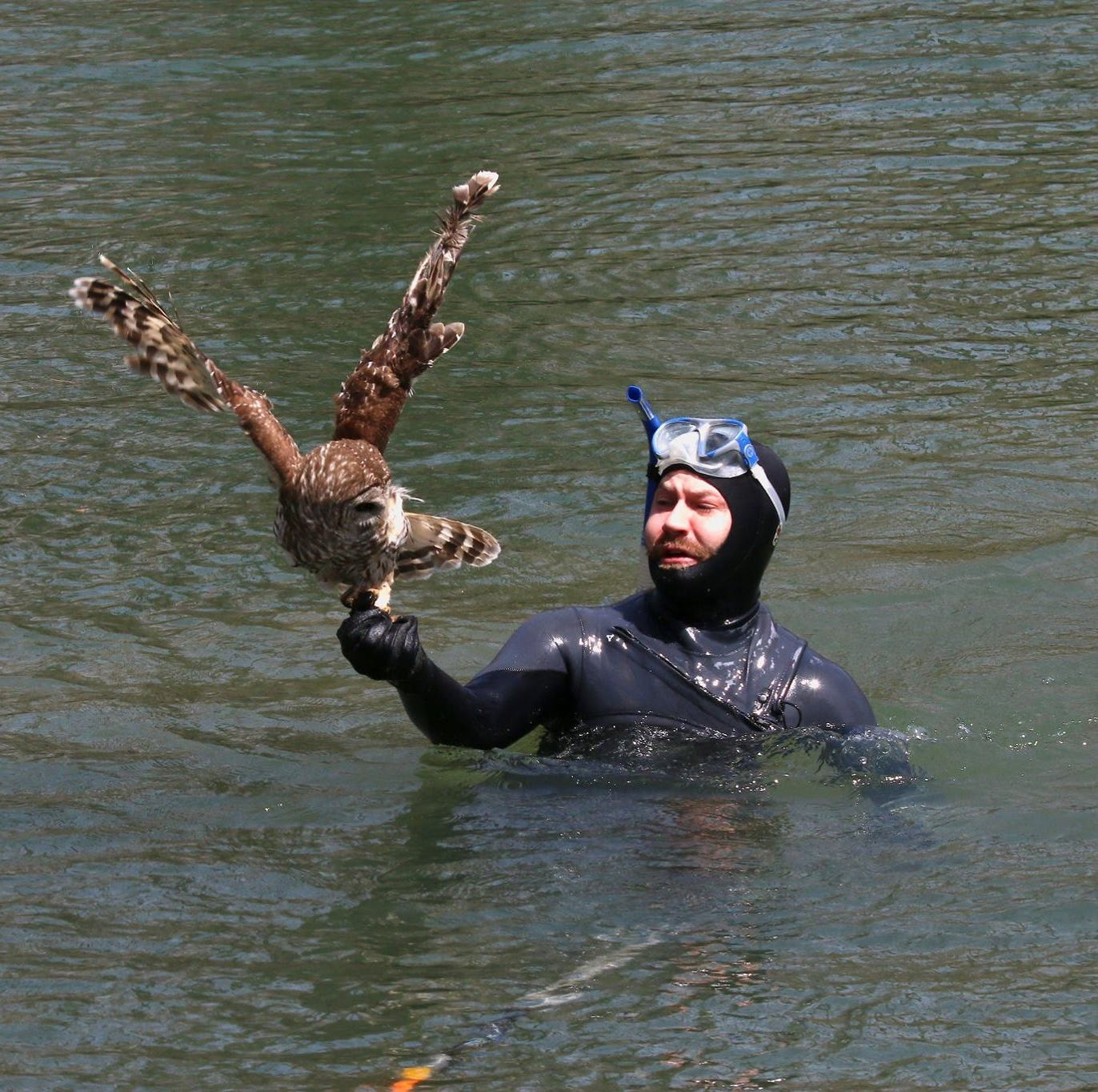 Guy in a wetsuit makes miraculous owl rescue on James River