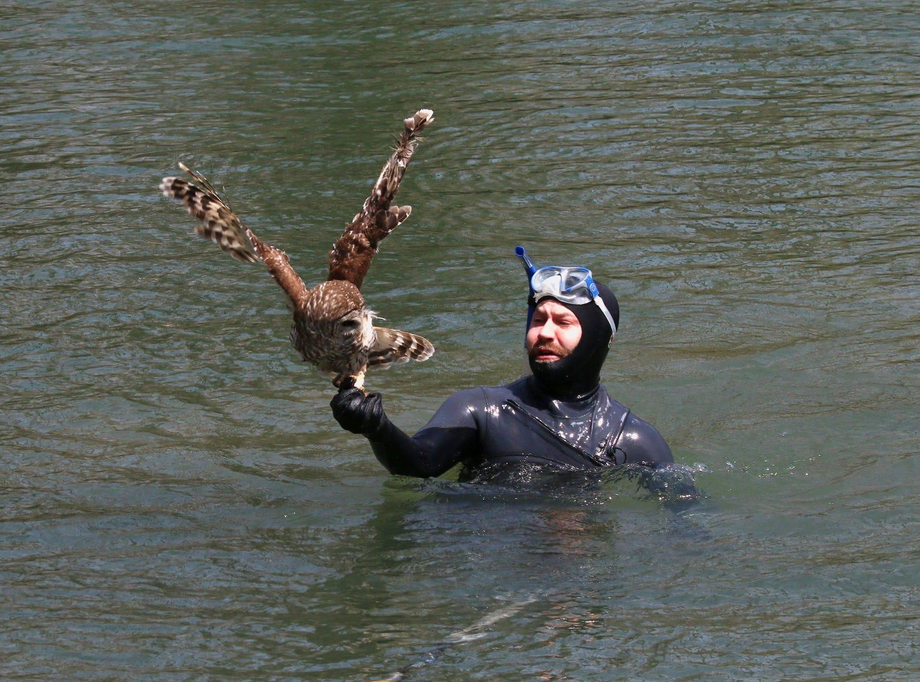 The injured owl fell right into Jonathan Knapp's hand.