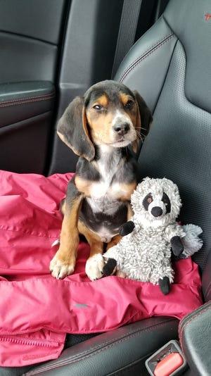 Puppy in a car.