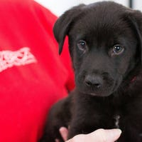 40 Dogs And Cats Will Be Up For Adoption In Dover This Weekend
