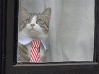 We're worried about Julian Assange's cat