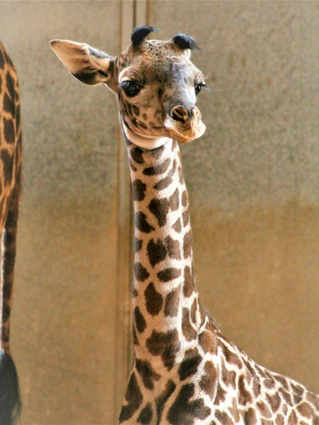 How zoos and aquariums can help save 1 million species from