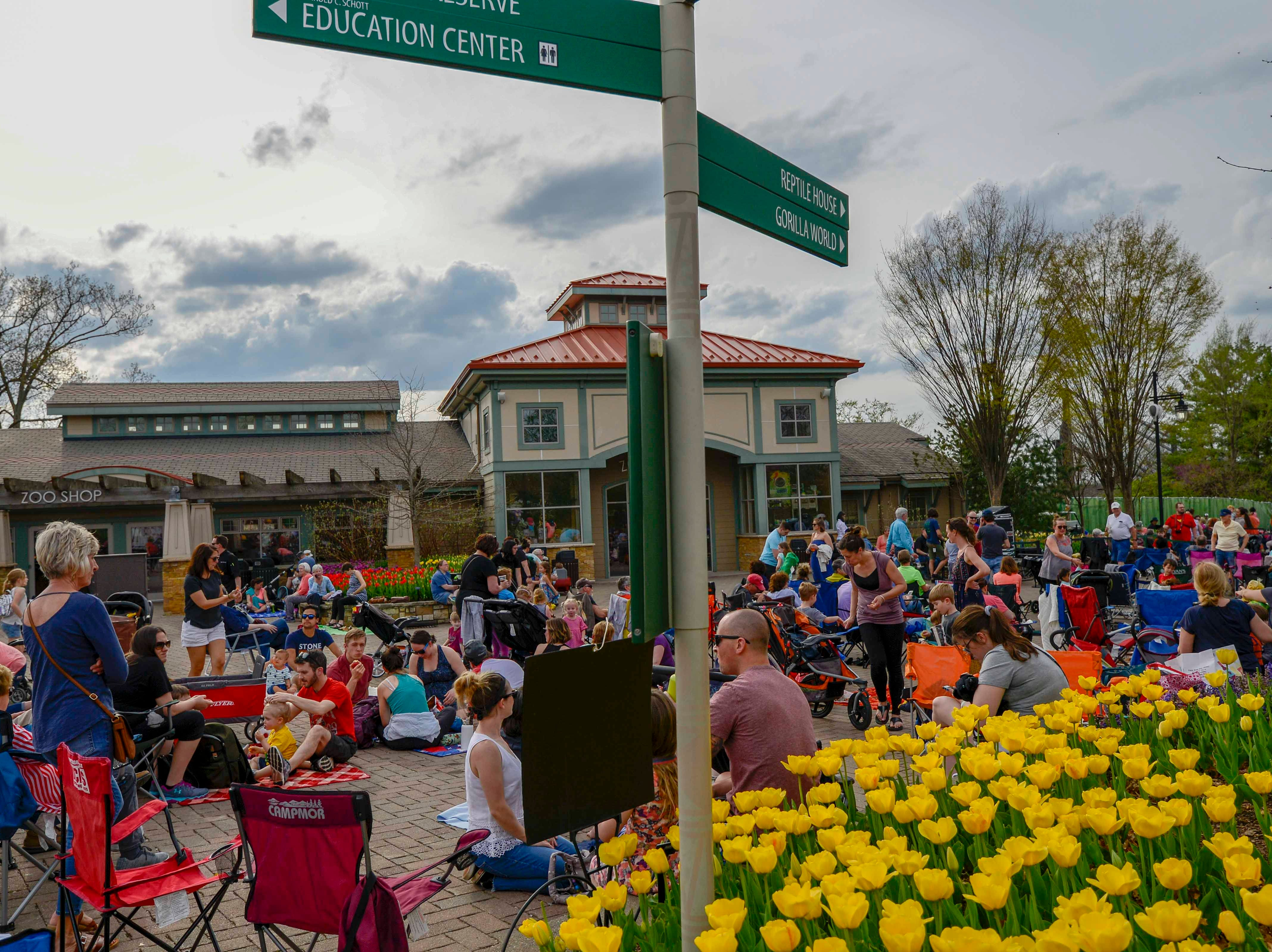 "The 2nd. of the April series ""Tunes & Blooms"" was held at the Cincinnati Zoo this Thursday, April 11,2019.  The series runs each Thursday for the month of April. A large number of people turned out to enjoy the weather, the music and especially the thousands of tulips."