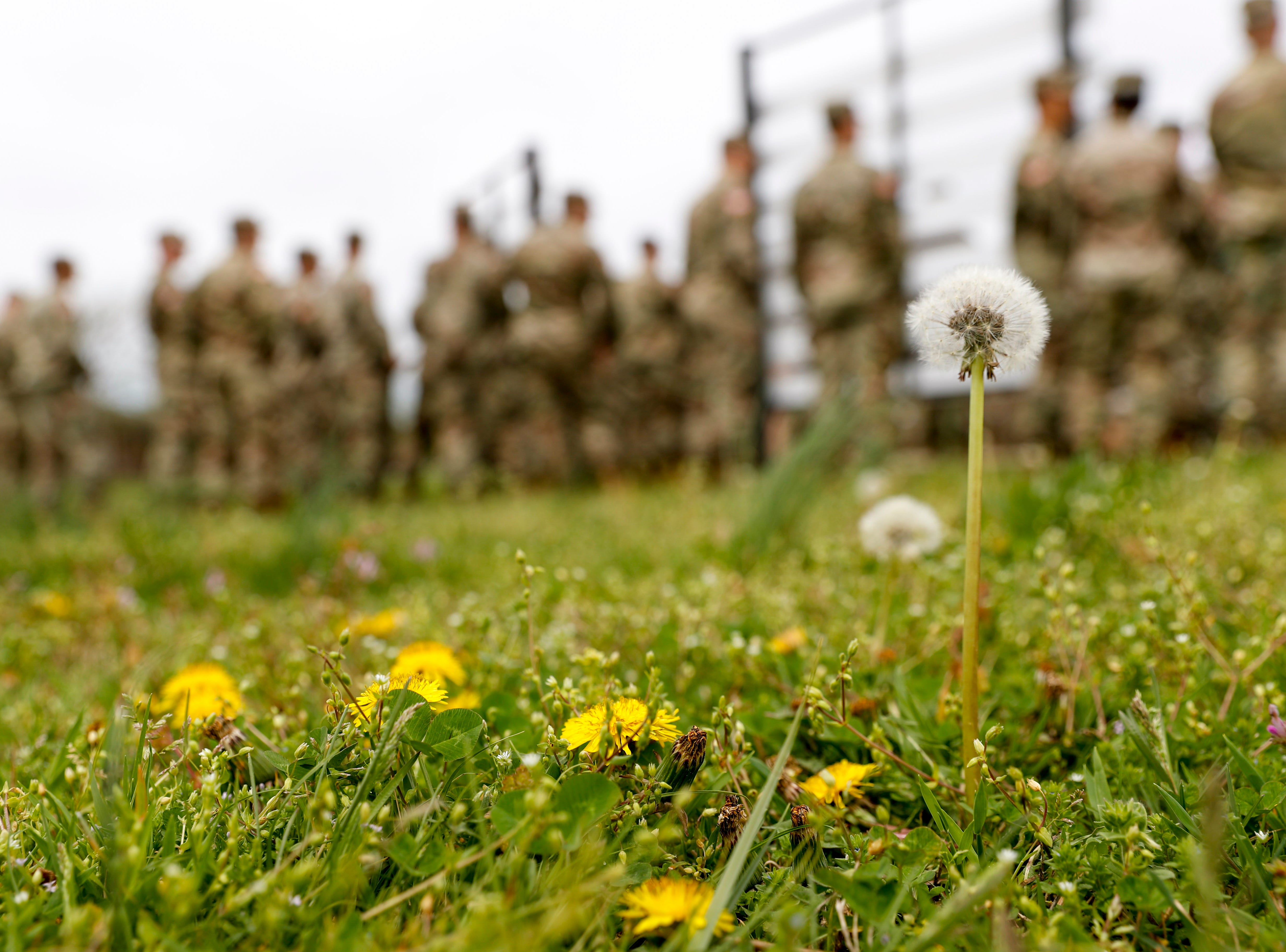 Dandelions bloom in the grass surrounding the site of a colors casing ceremony prior to deployment for Ukraine at 2 BCT Headquarters in Fort Campbell, KY., on Friday, April 12, 2019.
