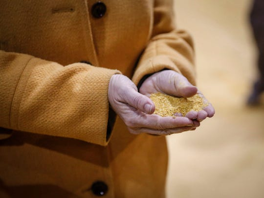 U.S. senator and current Democratic presidential candidate hopeful Amy Klobuchar scoops up a palm full of grain during a tour of the Lincoln Way Energy plant in Nevada on Friday, April 12, 2019.