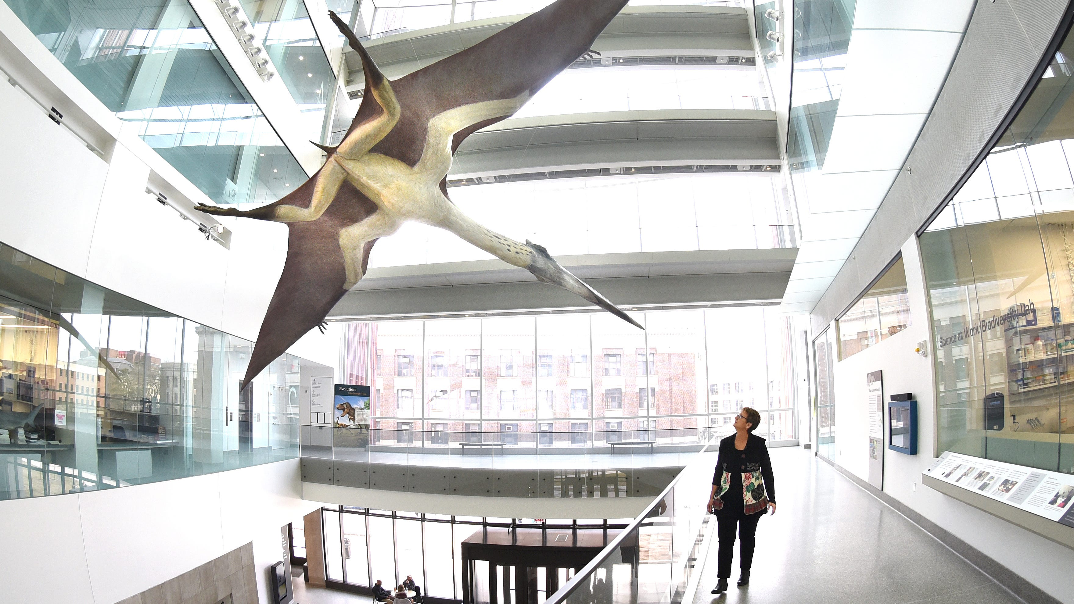 Lori Ann Dick, the museum's marketing and communications manager, gazes at a quetzalcoatlus, the largest flying animal with a 35-foot wingspan, one of the main attractions at the University of Michigan's Natural History Museum.
