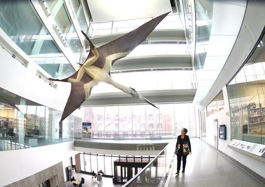 Quetzalcoatlus, a flying reptile with a 35-foot wingspan, dominates one of the atriums at the University of Michigan's newly reopened Museum of Natural History.