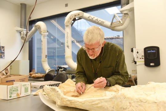 Dr. William J. Sanders works to uncover a Xiphactinus fossil at the Fossil Prep Lab in the University of Michigan's Museum of Natural History. Visitors can watch scientists as they work.