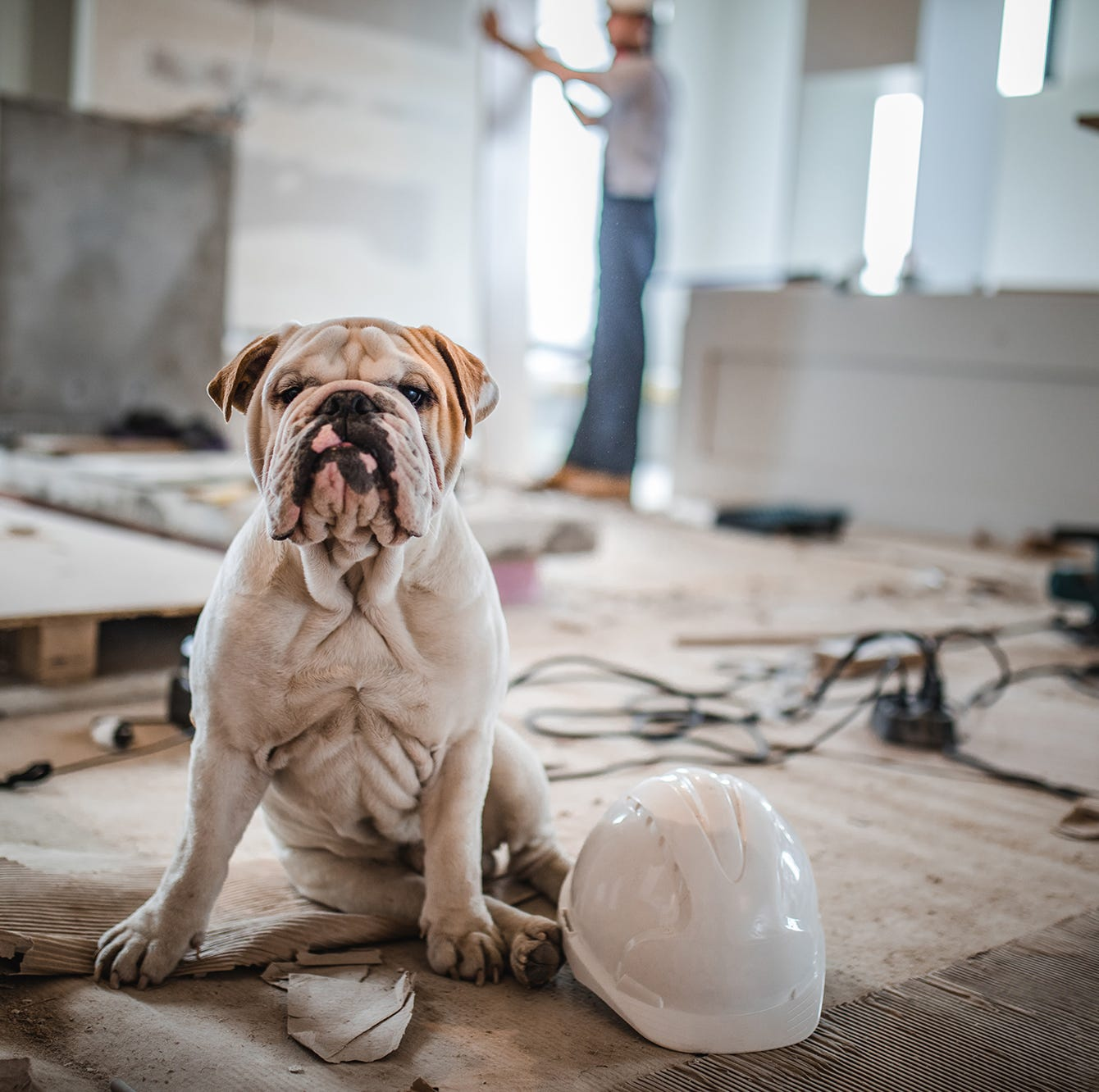 Pet Safety During a Home Remodel