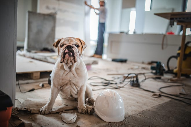 Embarking on such remodeling projects — even small ones  — can cause anxiety for many pets.