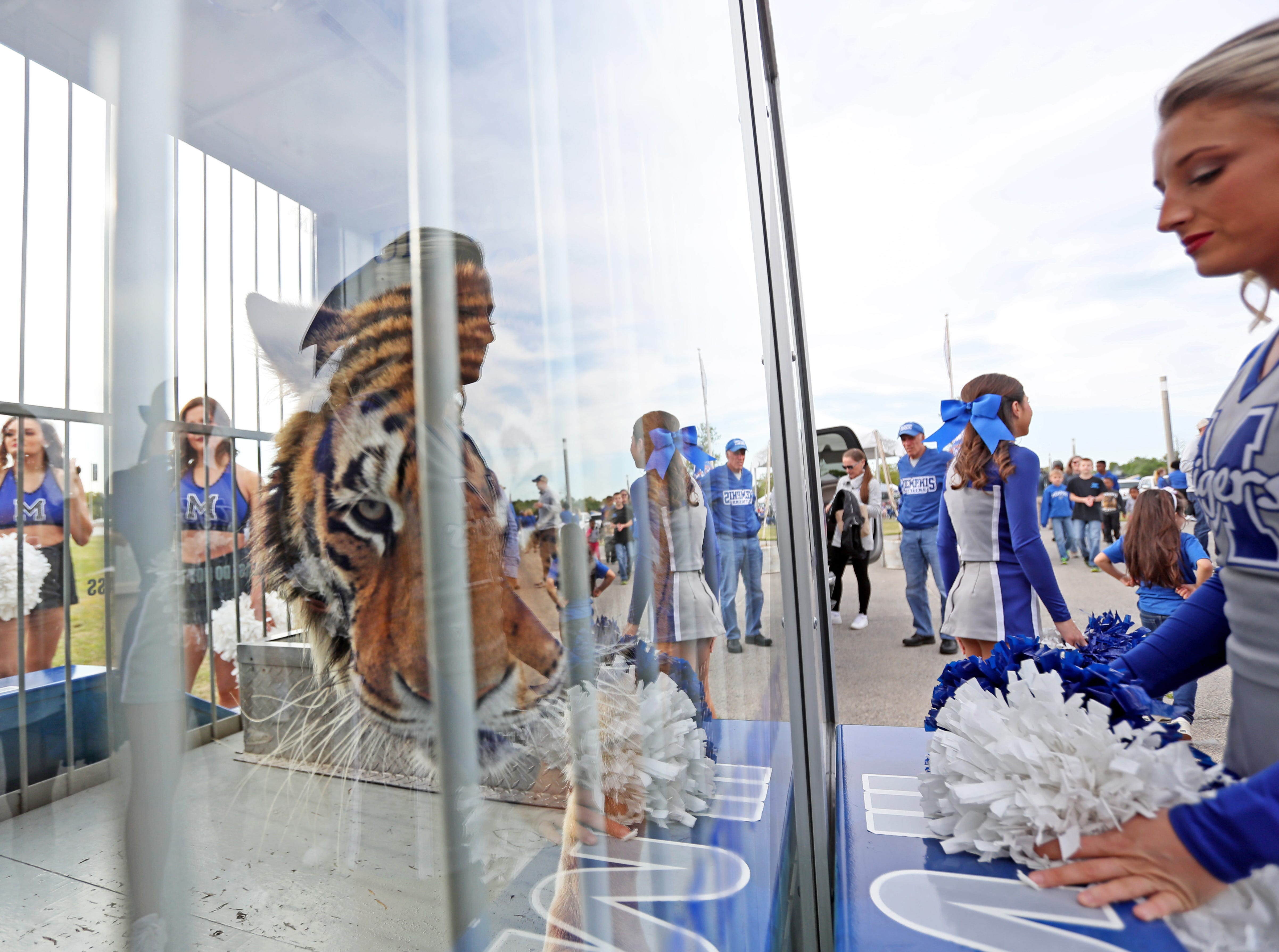 Tom the tiger circles in his cage before the Tigers 'Friday Night Stripes' spring game at Liberty Bowl Memorial Stadium on Friday, April 12, 2019.