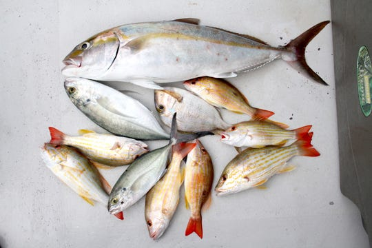 A selection of fish caught during a morning of hand-lining in the Caribbean Sea near Belize City, Belize, included various species of jacks, snappers and porgies.