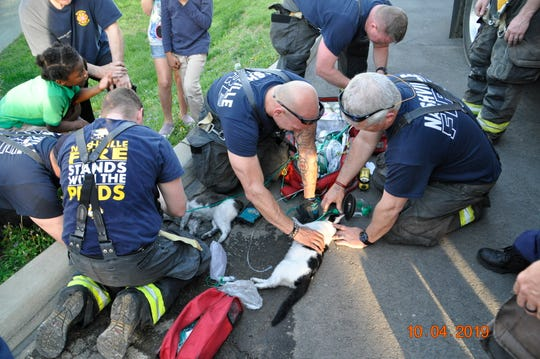 Two pet cats had to be revived by firefighters after authorities say a Madison woman set her bed on fire and then called 911 to report it.