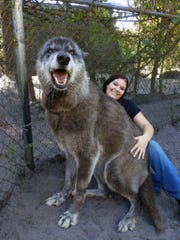 Brittany Allen with Yuki at Shy Wolf Sanctuary in Collier County.