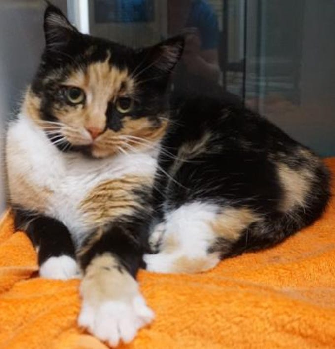 Jill is a 3-year-old calico, she is mellow and loves to lounge around. She likes attention and wants to be a part of your family so stop in and adopt her. She is spayed and ready to go home.  The Farmington Animal Shelter is located at 133 Browning Parkway and can be reached at 505-599-1098. Check Petfinder.com for an up-to-date list of pets up for adoption.