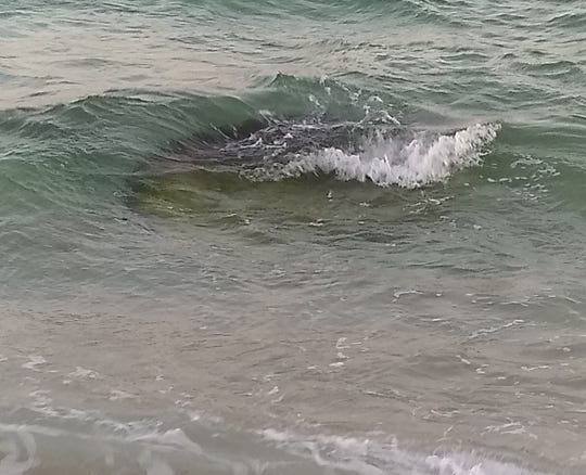 A reader spotted this strange object in the waters off Langdon Beach at Gulf Islands National Seashore.