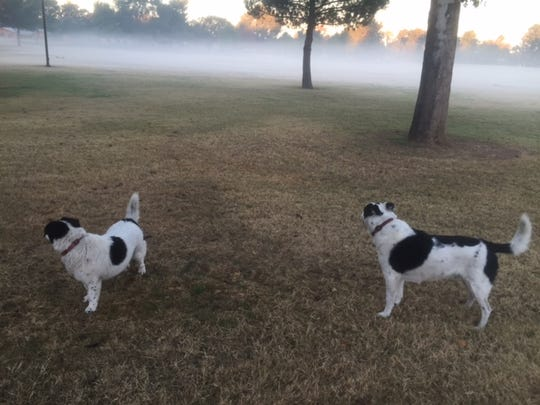 Heaven? Or dogs in a Phoenix park on a misty day? Or both?