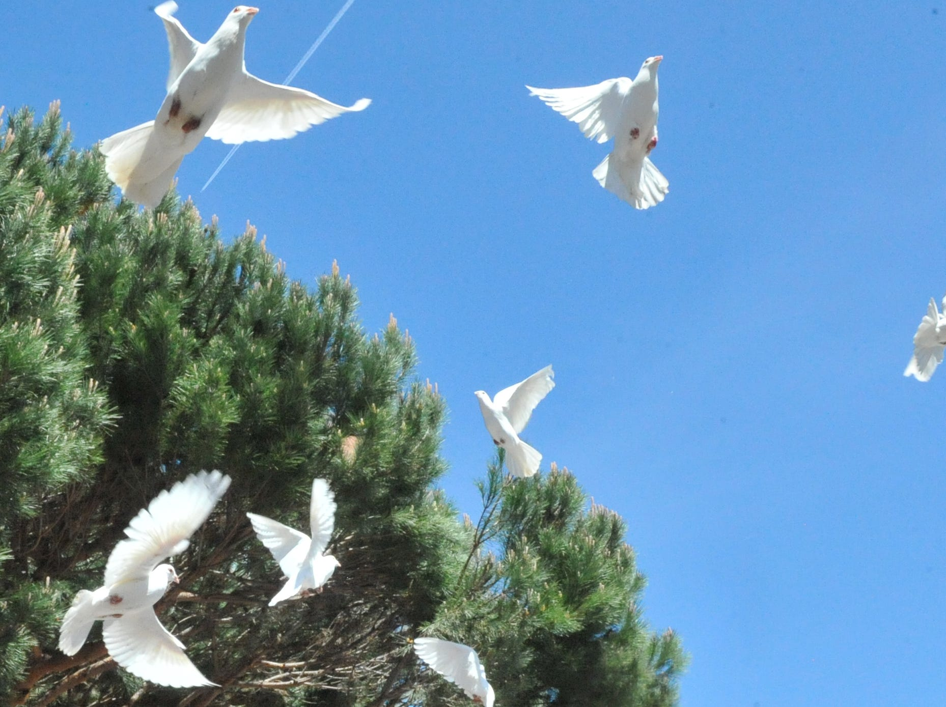 The doves take flight. April 12, 2019.