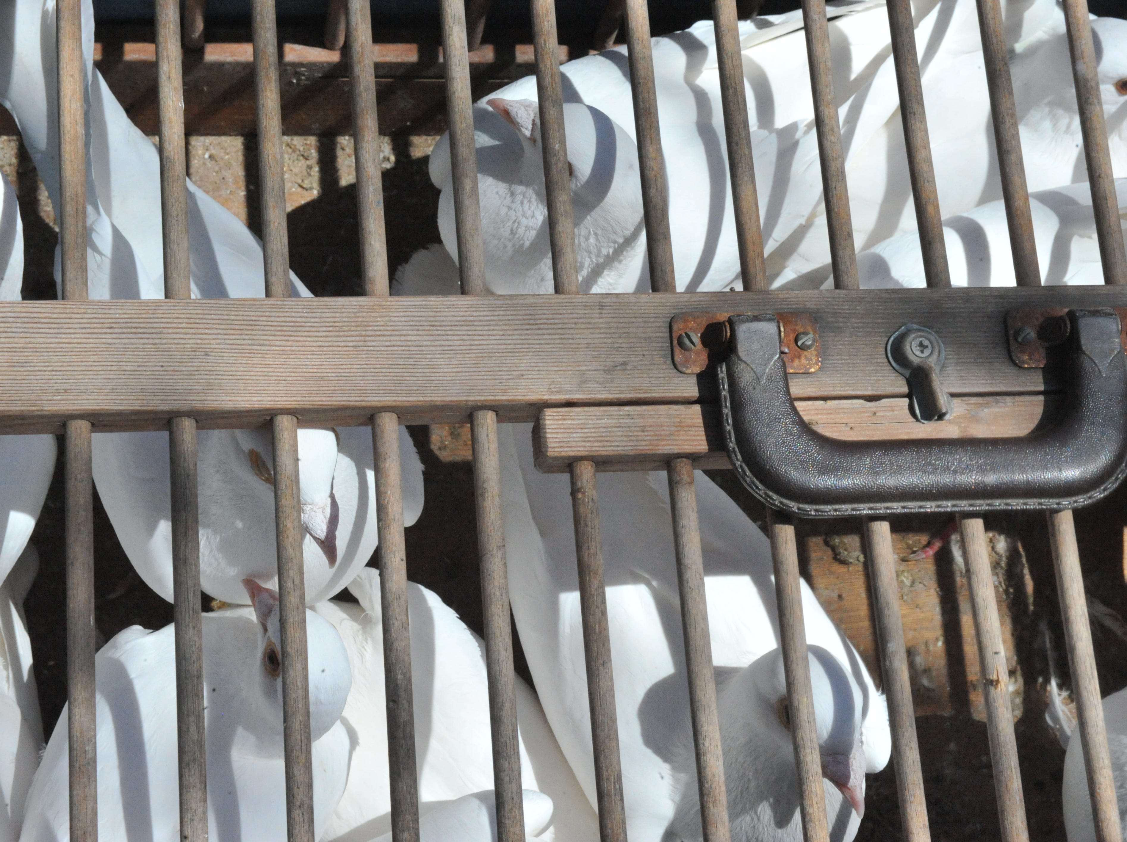 Doves wait patiently in cages for the annual dove release, done in honor of those lost to crime and violence. April 12, 2019.