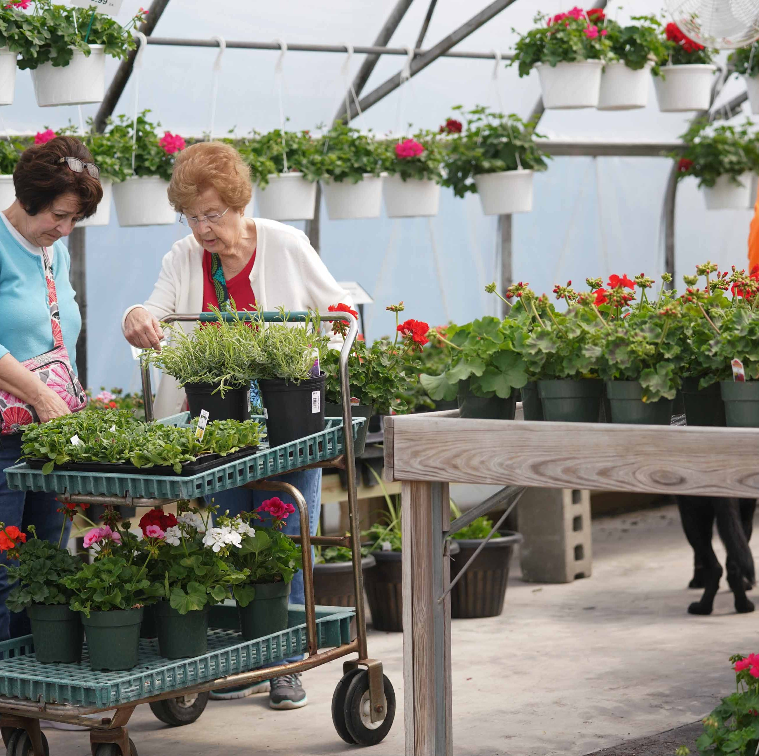 Willey Farms begins rebirth after fire with garden center, greenhouse opening