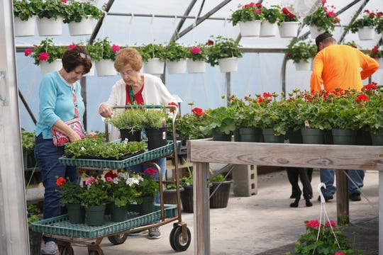 Customers shop the new greenhouses at Willey Farms. After a fire destroyed Willey Farms in Townsend in November, the beloved business opened up the garden center on Friday. It is still working on rebuilding the rest of the business.