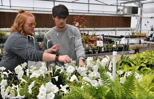 Noah Randall and his teacher, Amber West, clean up a group of white petunias for the Career Education Center's annual plant sale. The sale continues Saturday from 9 a.m. to 2 p.m. at the CEC campus greenhouse.
