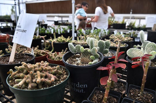 Cacti and succulents, ferns, flowers and other varieties are available at the Career Education Center's annual plant sale which continues Saturday from 9 a.m. to 2 p.m. at the CEC campus greenhouse.