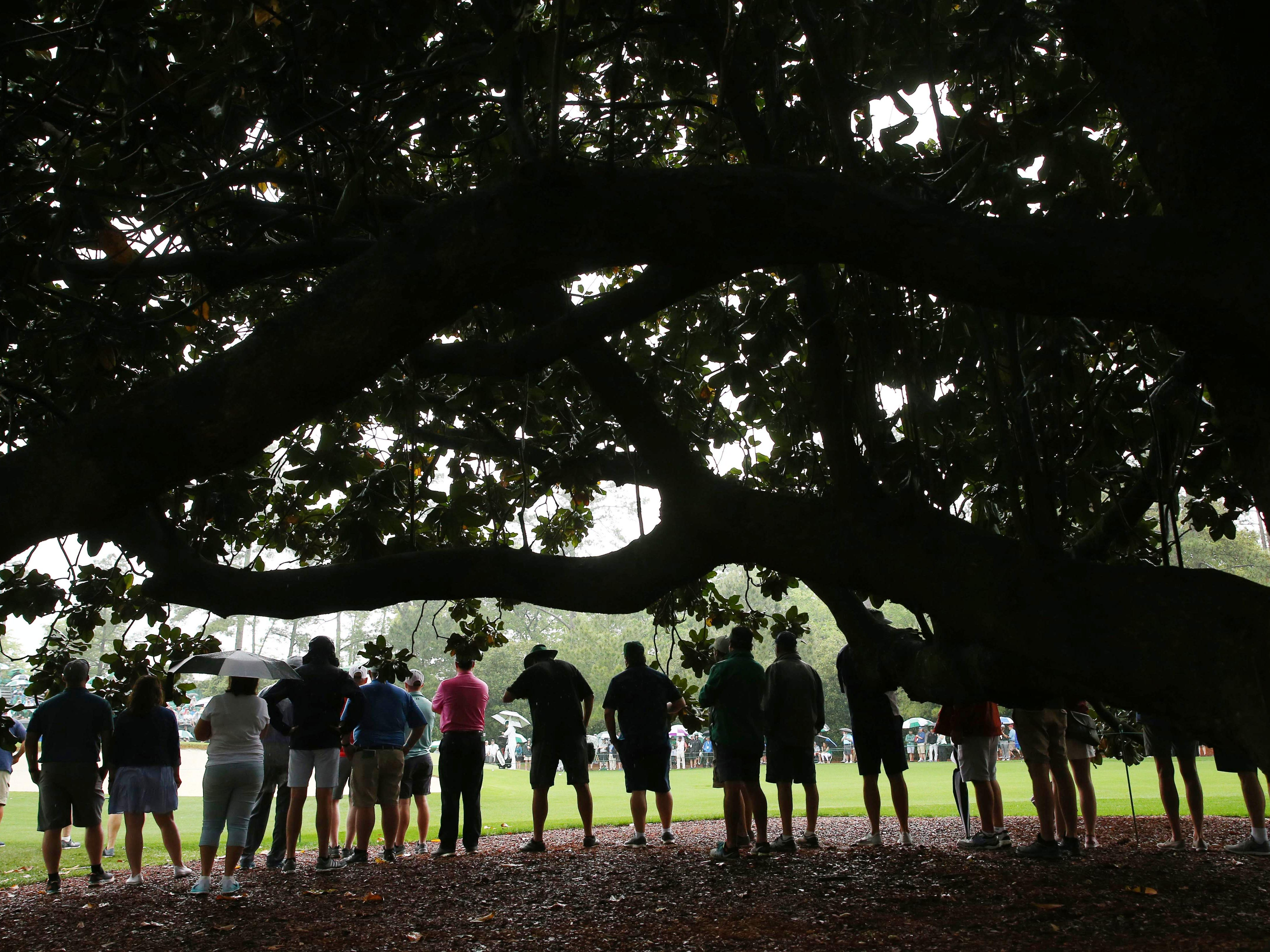 Patrons watch from under the big oak tree as rain falls during the second round of the Masters.