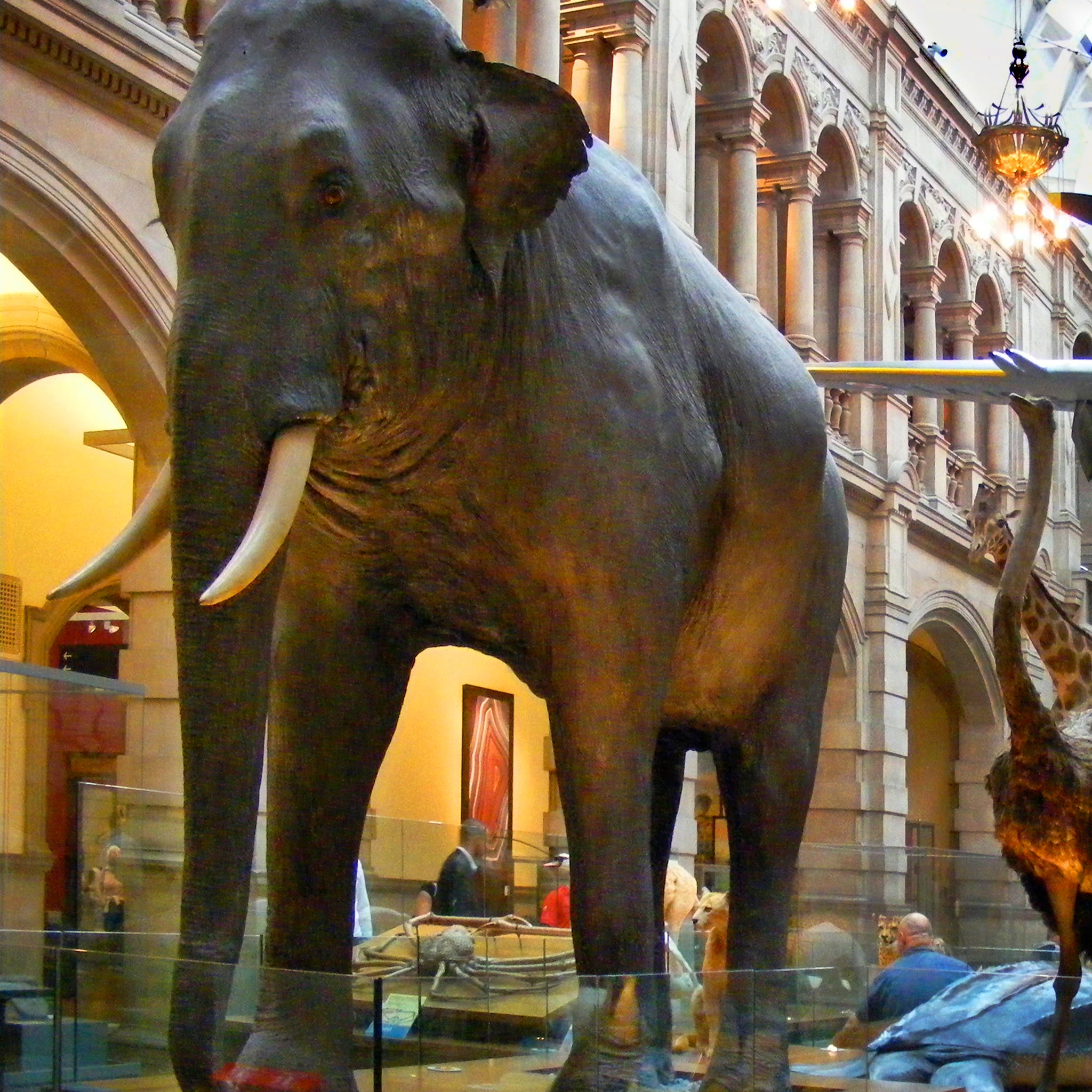 The Kelvingrove Art Gallery houses everything from Mackintosh's art nouveau designs to stuffed elephants to medieval armor.