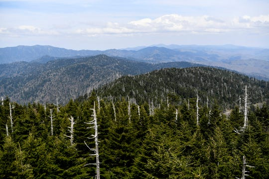 A view from the top of the observation tower at Clingmans Dome at Great Smoky Mountain National Park April 11, 2019.