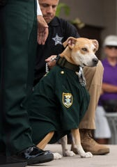 Deputy Chance of the Lee County Sheriff's Office was among more than 50 dogs and their owners attending the Deputy Dogs event on Saturday at the Bell Tower Shops in south Fort Myers. The Lee County Sheriff's Office encouraged residents to be an extra set of eyes for LCSO while walking their dogs.
