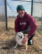 Dan Miller, shelter operations manager at the Wisconsin Humane Society Door County Campus, with a pug that is among 25 dogs the campus took in from two other shelters in the state.